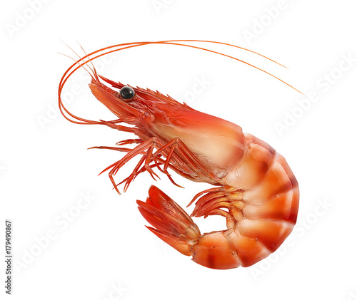 Cooked prawn or tiger shrimp isolated on white background