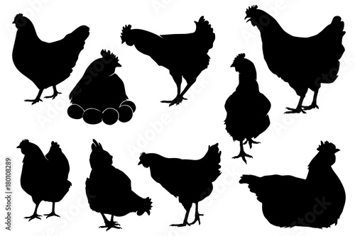 Fototapeta hen chicken silhouette set