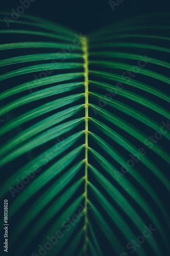 Palm leaf background.