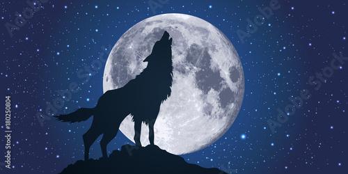 Fototapeta premium wilk - księżyc - światło księżyca - wycie - noc - symbol - strach - dziki - niebezpieczny