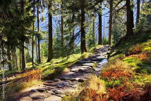 Wanderweg im Riesengebirge - hiking trail in Giant Mountains