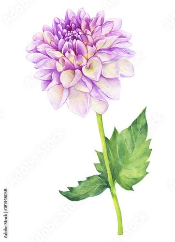 Fotomural Beautiful pink Dahlia flower