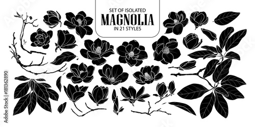 Obraz na plátně Set of isolated silhouette magnolia in 21 styles