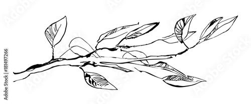 Obraz na płótnie Hand drawn tree branch with leaves painted by ink