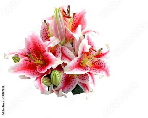 Fotografia Bouquet of lilies, on white background. Stargazer lily