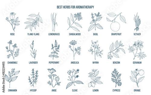 Obraz na płótnie Best herbs for aromatherapy