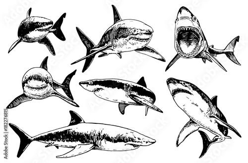 Wallpaper Mural Graphical set of sharks isolated on white background, vector illustration