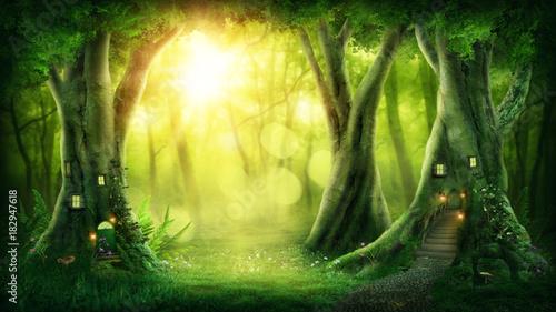 Fotografie, Obraz Dark magic forest