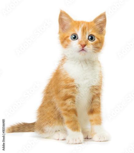 Photo Ginger kitten on white background