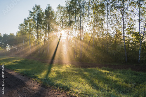 The sun's rays shine through the trees in the morning in the forest