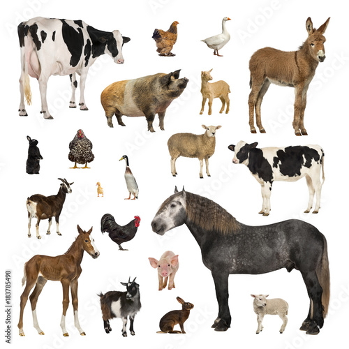 Large collection of farm animal in different position