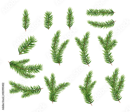 Vászonkép Collection Set of Realistic Fir Branches for Christmas Tree, Pine