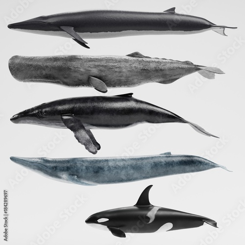 Realistic 3D Render of Whales Collection Fototapet