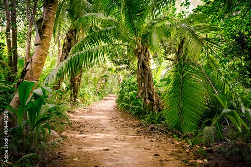 Ground rural road in the middle of tropical jungle
