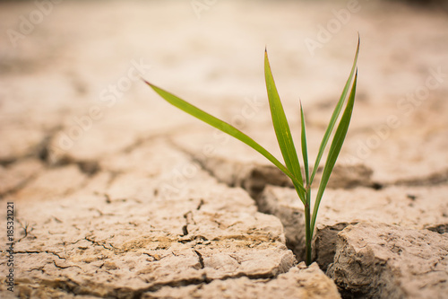 Canvas Print Little green plant on crack dry ground, concept drought