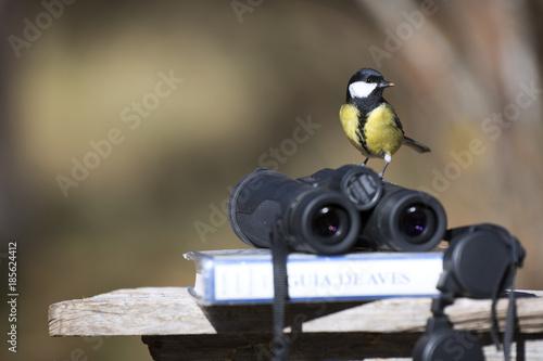 Fototapeta premium Tit ptak z lornetką i przewodnik ornitologiczny ptak pole