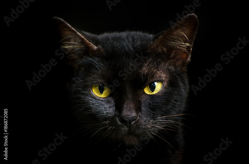 Stampa su Tela Closeup portrait black cat The face in front of eyes is yellow