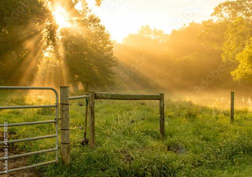 Fotografie, Obraz Morning Sun Rays Shining through the Trees