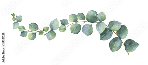Slika na platnu Watercolor vector wreath with green eucalyptus leaves and branches