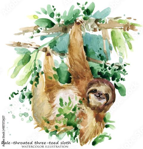 Wallpaper Mural Watercolor sloth illustration. tropical animal