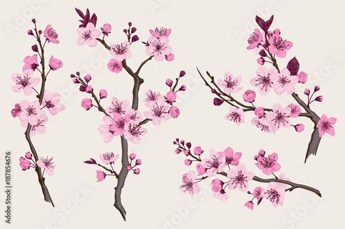 Valokuva Sakura