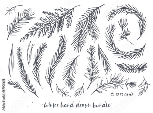 Photo Vector hand drawn elements big set, bundle with winter tree, pine needles, juniper branches with berries, red wood, blue spruce, cedar evergreen leaf
