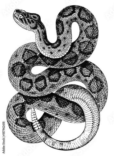 Fototapeta premium Mojave Klapperschlange-Crotalus scutulatus-Rattlesnake-vintage