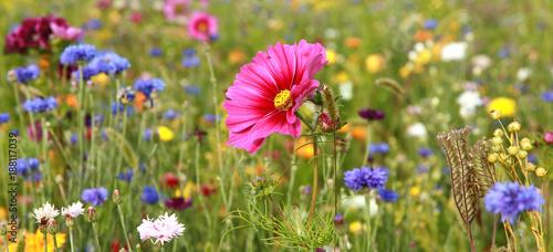 Stampa su Tela Jachère fleurie