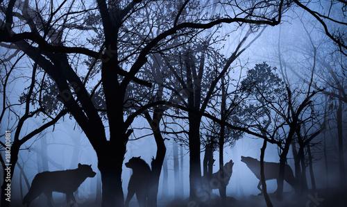 Fototapeta premium wataha wilków w lesie zanurzona w porannej mgle