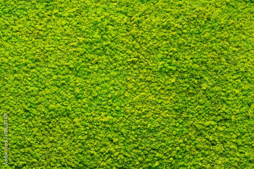Photo green moss texture, background