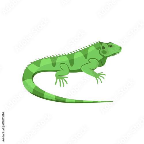 Fototapeta premium Vector illustration of a green iguana isolated on white background.