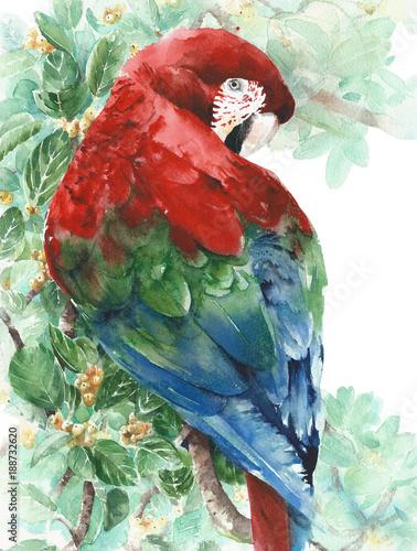 Papuziej ara czerwieni zieleni błękitny ptasi obsiadanie na drzewnej akwarela obrazu ilustraci odizolowywającej na białym tle
