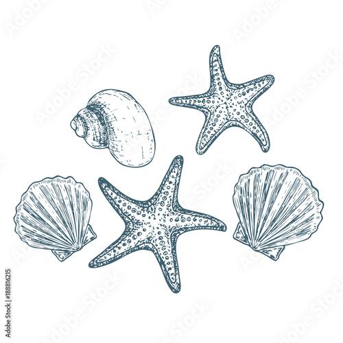 Obraz na plátně Shells and starfish on white background, cartoon illustration