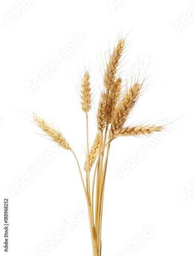 dry ears wheat grain isolated on white, with clipping path