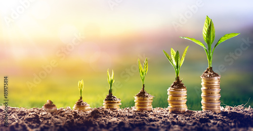 Obraz na płótnie Growing Money - Plant On Coins - Finance And Investment Concept