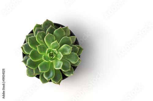 widok z góry kaktusowa roślina w garnku odizolowywa na białym tle