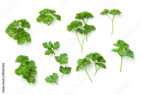 Leaves of Parsley Isolated on White Background
