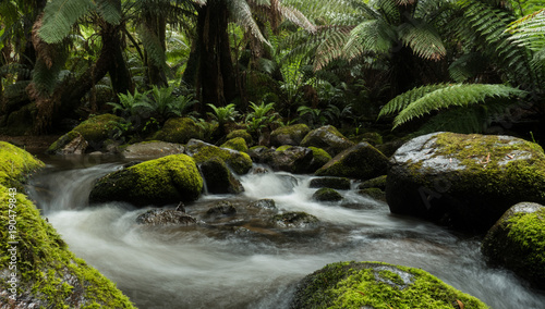 Fotografia Rainforest stream swirls water between moss covered rocks and overhanging ferns trees in pristine forest