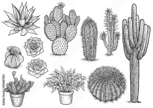 Obraz na plátne cactus nad succulent illustration, drawing, engraving, ink, line art, vector