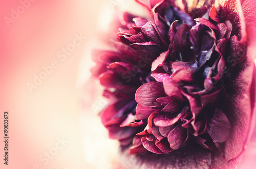 Beautiful spring flowers background. Beautiful blurred background.
