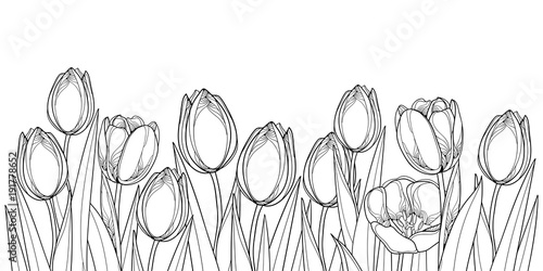 Vector horizontal border with outline tulip flowers, bud and ornate leaves in black isolated on white background. Contour tulips for greeting spring design or coloring book. #191778652