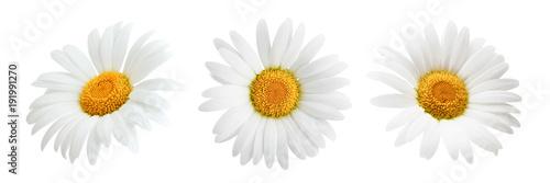 Billede på lærred Daisy flower isolated on white background as package design element