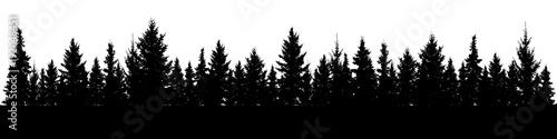 Carta da parati Forest of Christmas fir trees silhouette
