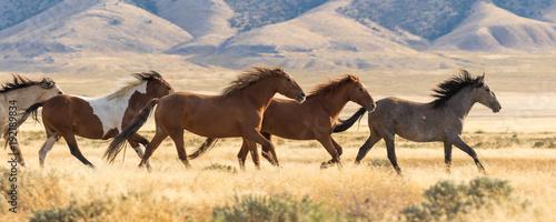 Canvas Print Herd of Wild Horses Running
