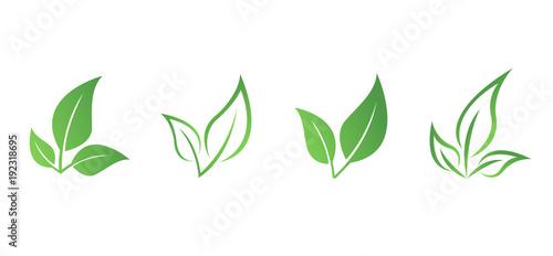 Zielony liść eko