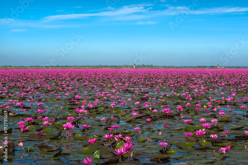 Fotografia Lake of Red waterlily at Udonthani Province , Thailand