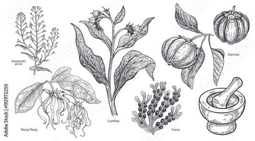Obraz na płótnie Set of imedical plants, flowers and herbs.