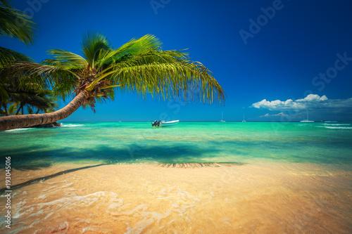 Palmtree and tropical beach. Exotic island Saona in Caribbean sea, Dominican Republic.