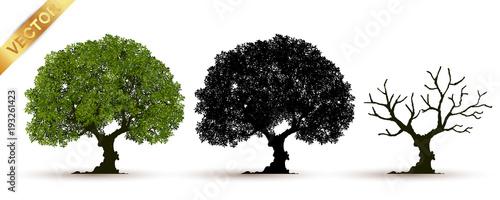 Fotografia tree with a realistic