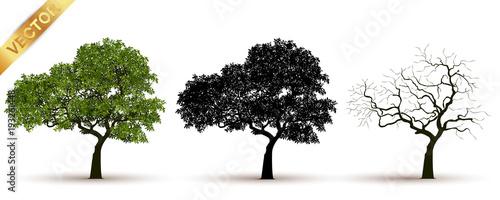 Fotografija tree with a realistic